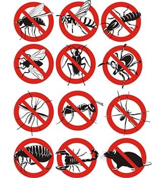 obtener un precio de una empresa de exterminio que puede fumigar las aranas de su propiedad residente o comercial en Planada California y ayudarle a prevenir futuras infestaciones