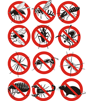 obtener un precio de una empresa de exterminio que puede combatir plagas de su propiedad residente o comercial en Salida California y ayudarle a prevenir futuras infestaciones